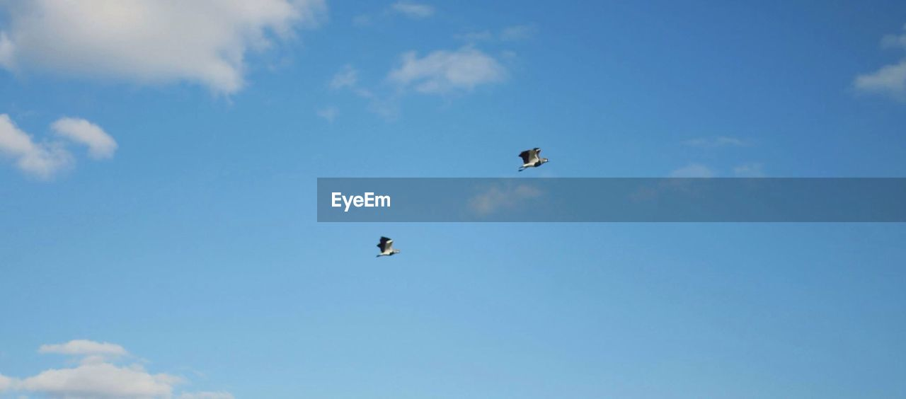 Low angle of birds against sky