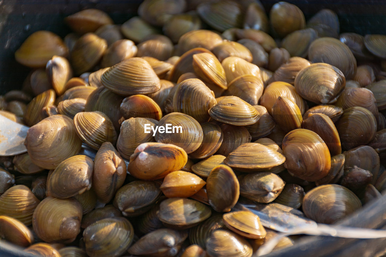 large group of objects, still life, close-up, abundance, no people, food and drink, full frame, food, wellbeing, backgrounds, freshness, shell, day, selective focus, healthy eating, indoors, brown, nut, animal wildlife, nut - food