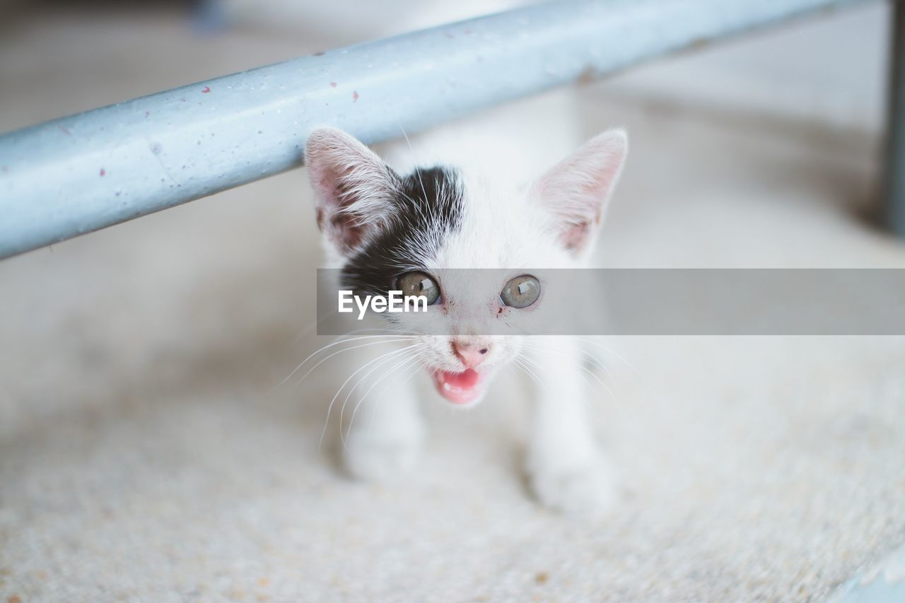 PORTRAIT OF CAT WITH EYES