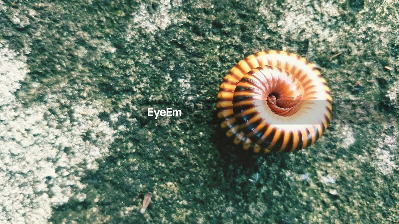 animal, shell, animal themes, animal wildlife, close-up, animals in the wild, no people, animal shell, textured, day, one animal, natural pattern, mollusk, nature, invertebrate, spiral, high angle view, gastropod, pattern, beauty in nature, outdoors, marine