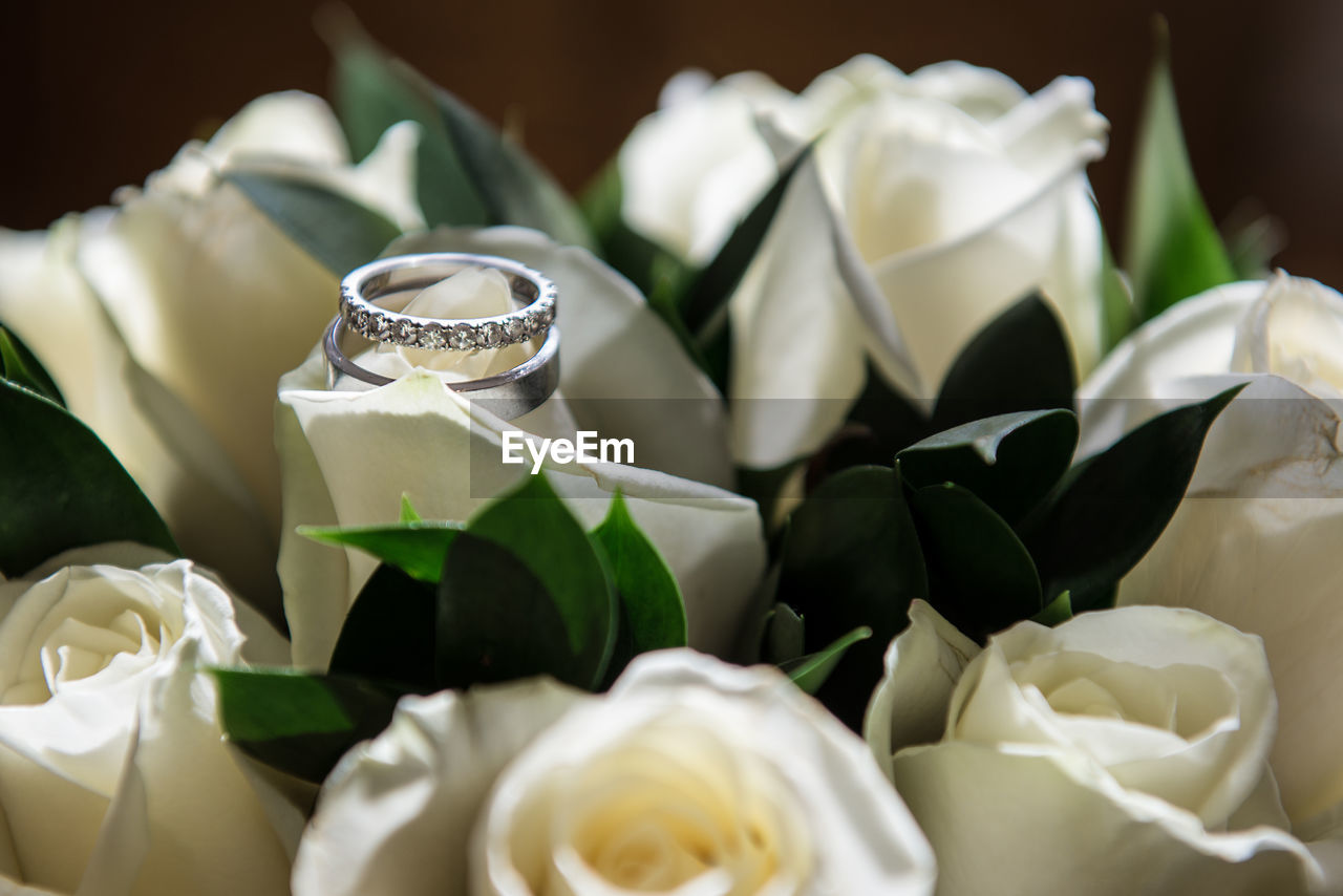 Close up of rings on rose