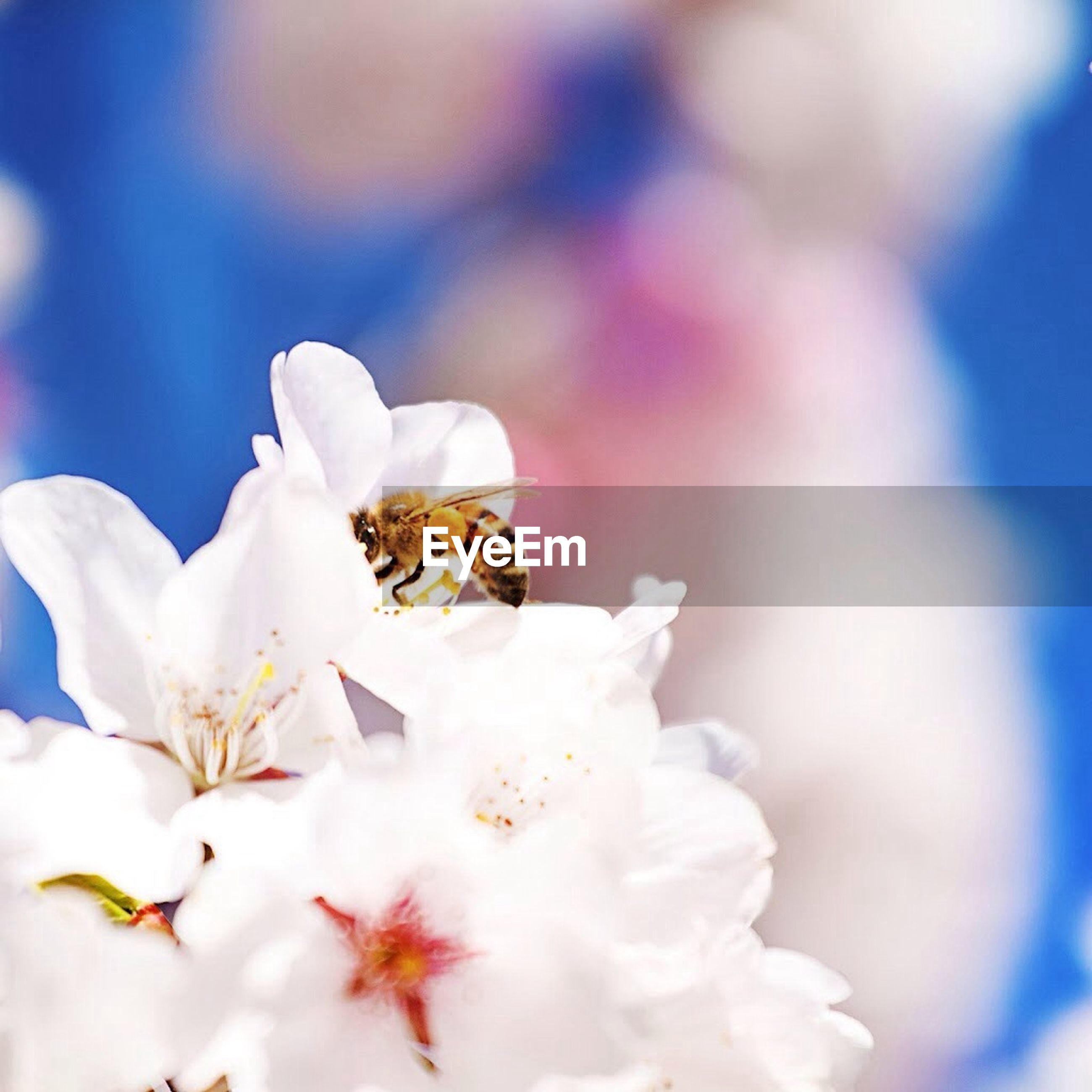 flower, petal, freshness, fragility, flower head, white color, beauty in nature, focus on foreground, close-up, growth, nature, blooming, stamen, selective focus, blossom, cherry blossom, in bloom, pollen, white, botany