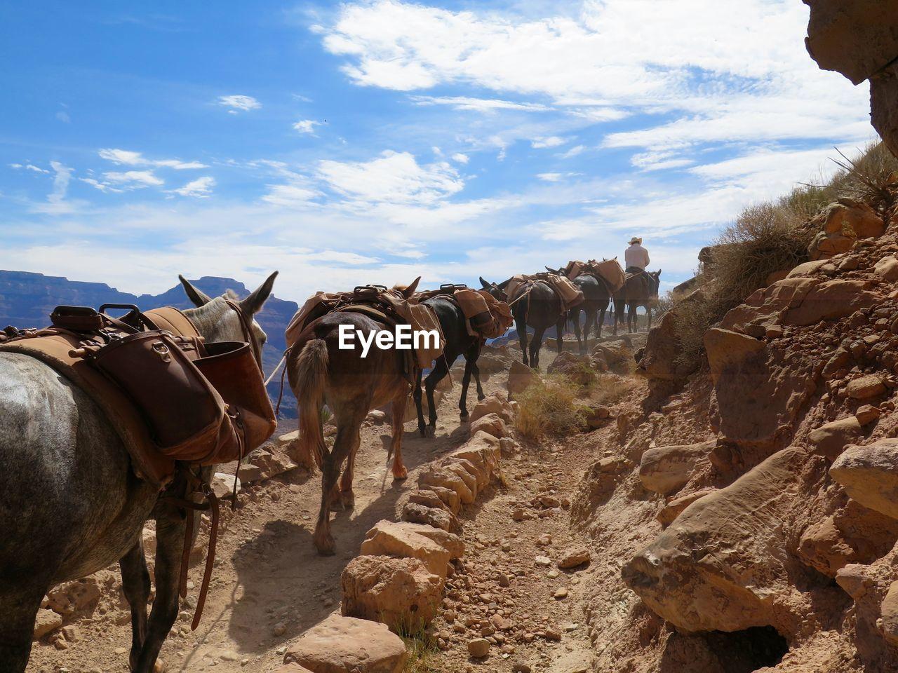Donkeys On South Kaibab Trail Against Sky