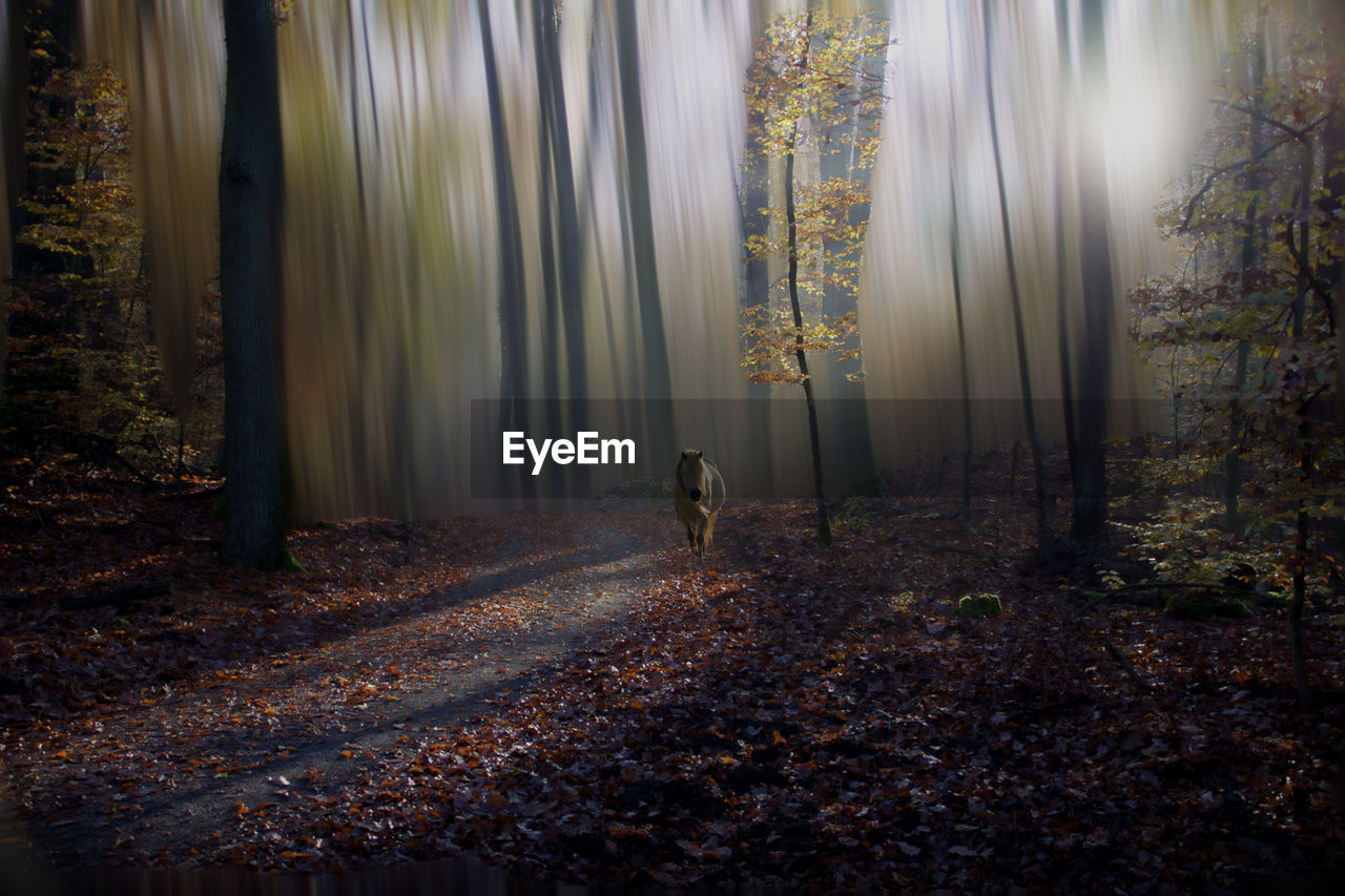 forest, land, tree, nature, leaf, plant part, one person, standing, day, real people, autumn, plant, woodland, tranquility, rear view, leisure activity, outdoors, walking, full length, leaves