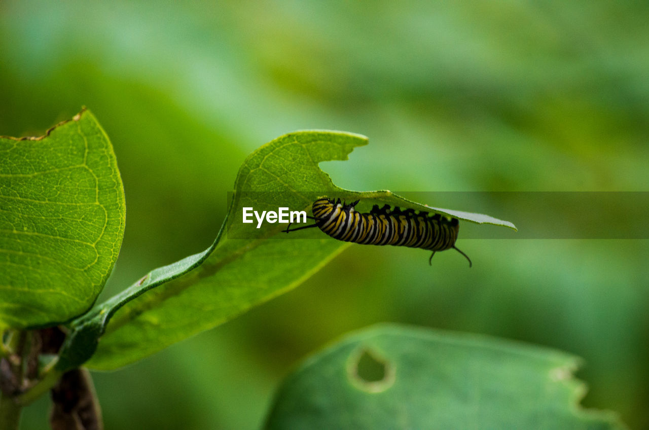 plant, green color, plant part, growth, leaf, beauty in nature, close-up, focus on foreground, nature, animals in the wild, no people, day, animal, animal wildlife, animal themes, one animal, fragility, vulnerability, insect, selective focus, outdoors