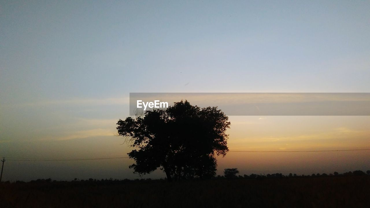 Silhouette of tree on landscape at sunset