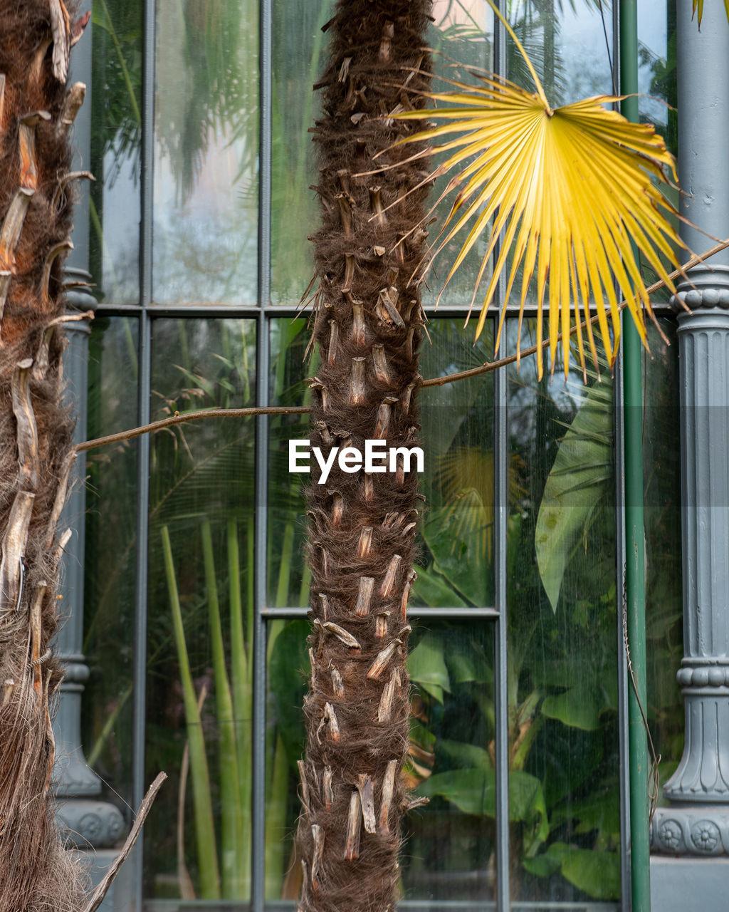 CLOSE-UP OF PLANTS ON WINDOW
