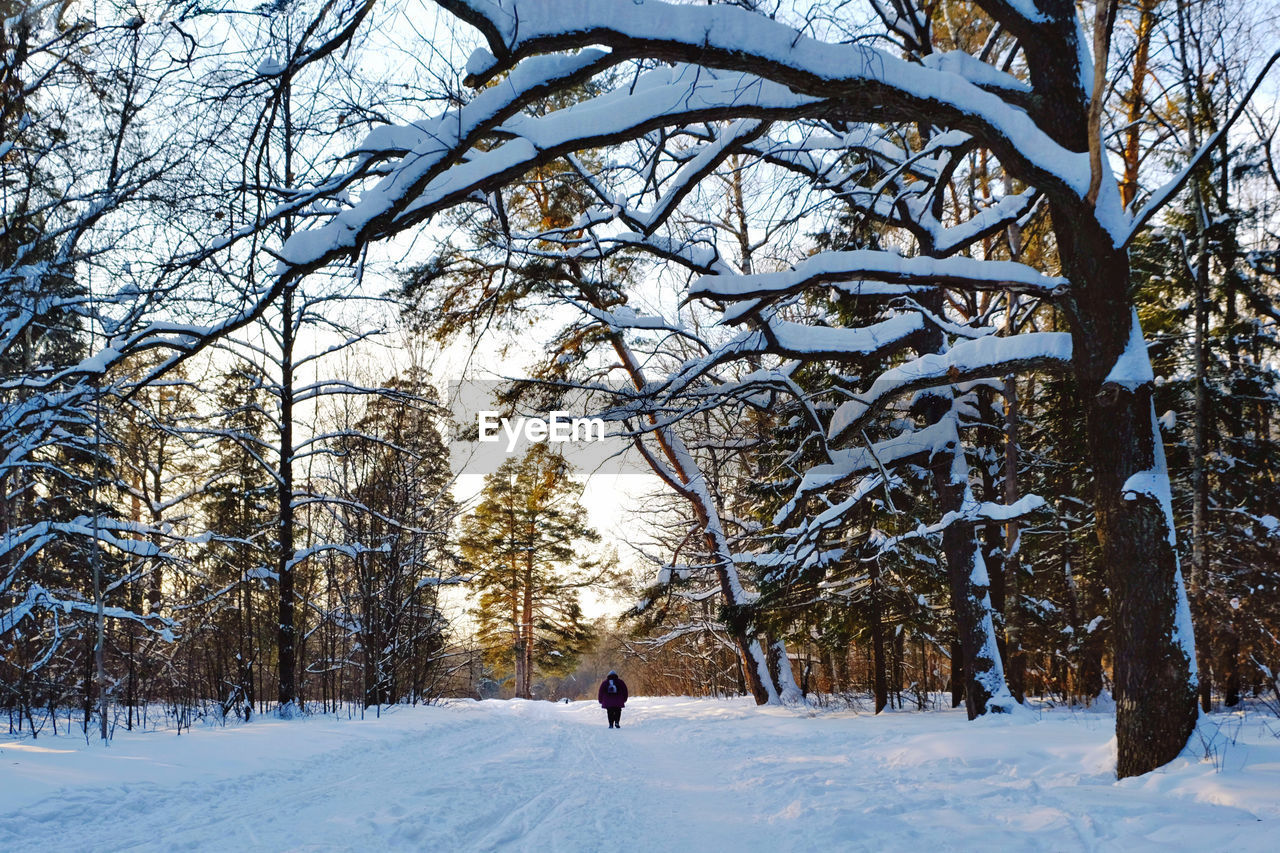 MAN WALKING ON SNOW COVERED LAND AGAINST TREES