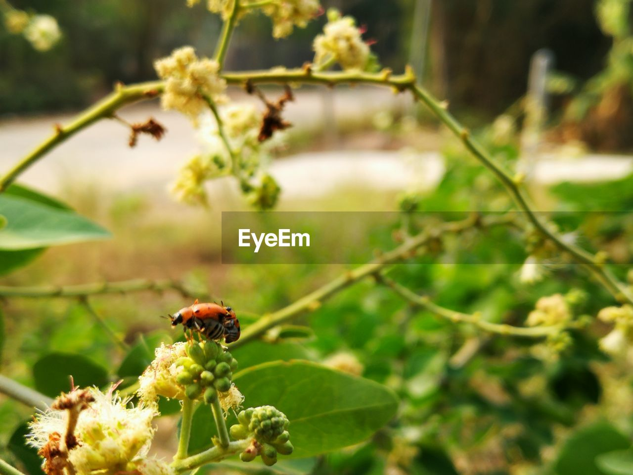 invertebrate, insect, animal themes, animal, plant, animals in the wild, animal wildlife, one animal, beauty in nature, flower, close-up, flowering plant, growth, nature, focus on foreground, freshness, day, no people, leaf, plant part, outdoors, flower head, pollination