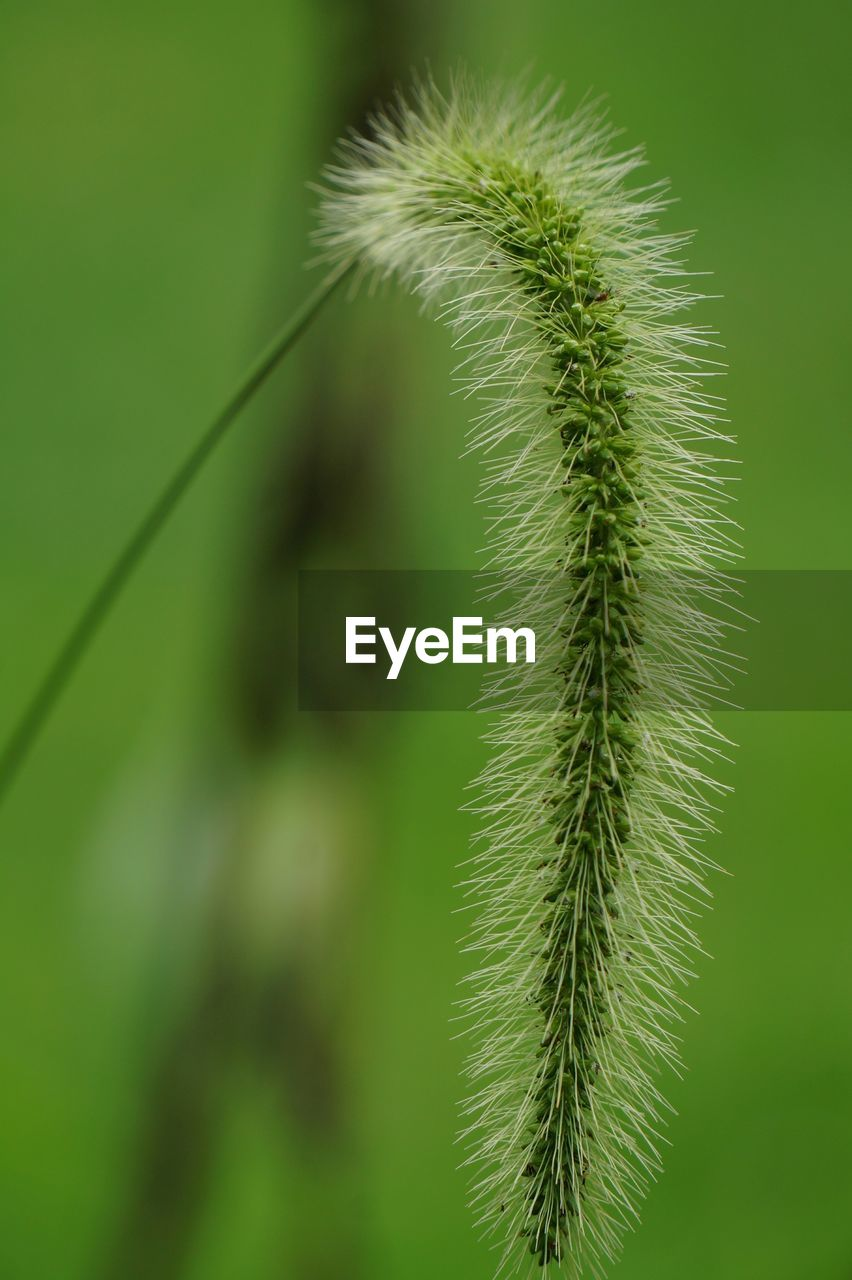 green color, growth, plant, beauty in nature, close-up, nature, no people, focus on foreground, tranquility, day, outdoors, selective focus, vulnerability, fragility, leaf, plant part, freshness, flower, green, natural pattern, spiky
