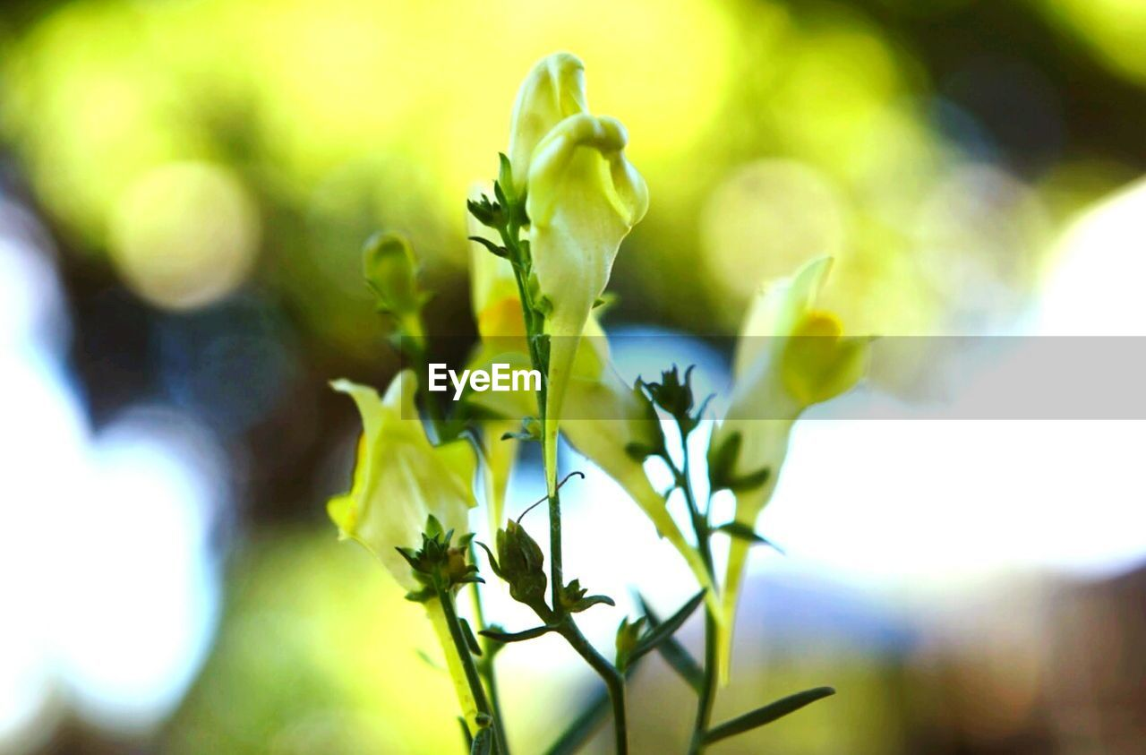 growth, nature, plant, beauty in nature, no people, green color, outdoors, day, close-up, fragility, freshness, flower