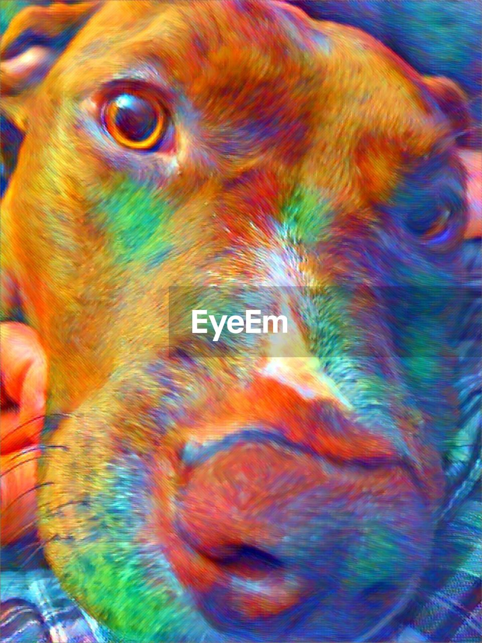multi colored, close-up, no people, animal themes, outdoors, day