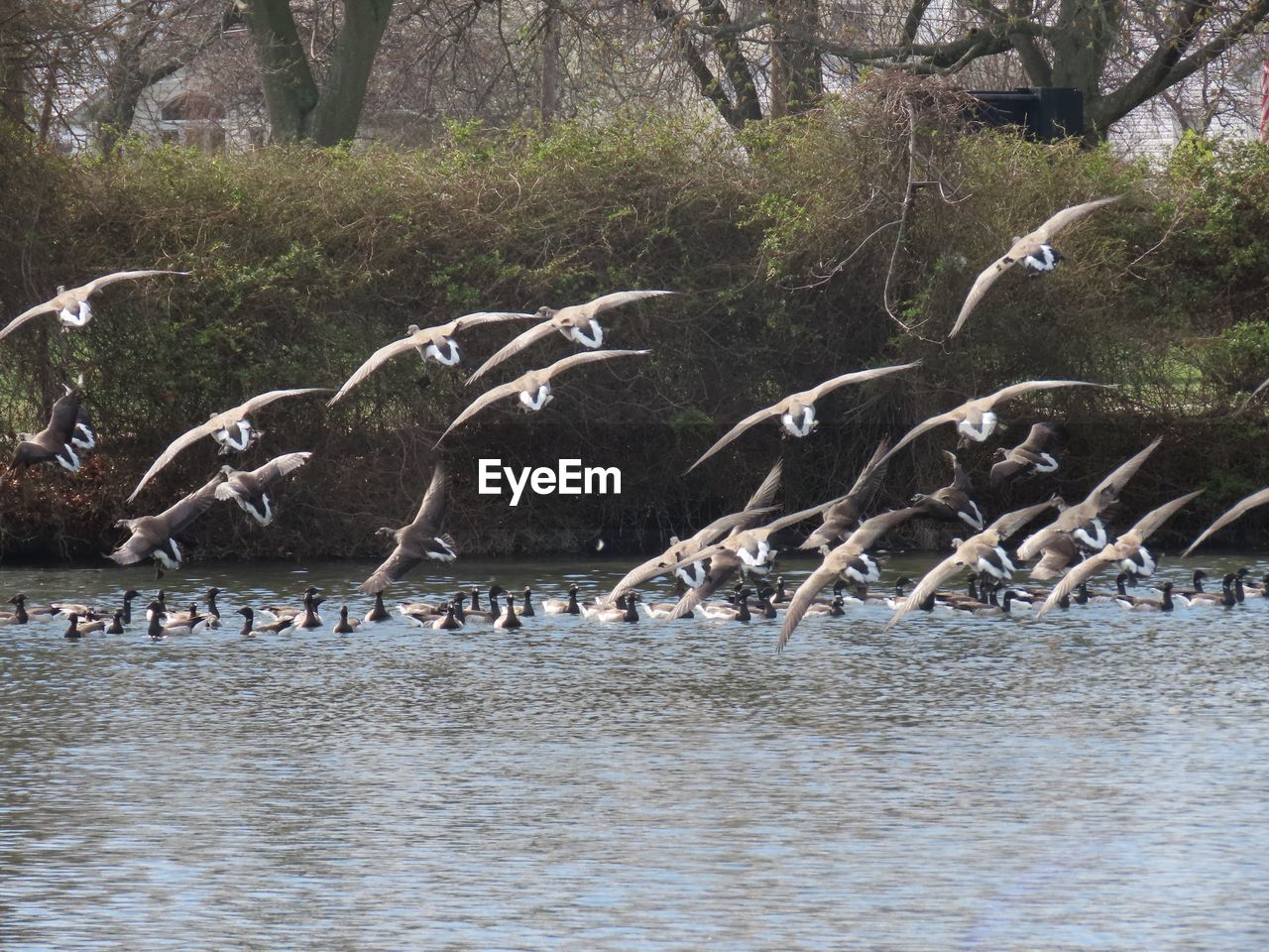 animals in the wild, water, animal wildlife, group of animals, animal themes, animal, large group of animals, vertebrate, bird, flying, spread wings, nature, no people, waterfront, day, flock of birds, sea, tree, seagull
