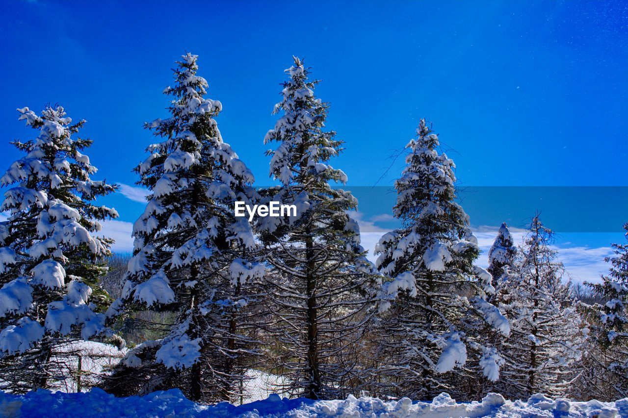 snow, tree, cold temperature, plant, winter, beauty in nature, sky, tranquility, scenics - nature, tranquil scene, blue, nature, land, no people, non-urban scene, day, environment, low angle view, forest, pine tree, coniferous tree, snowcapped mountain