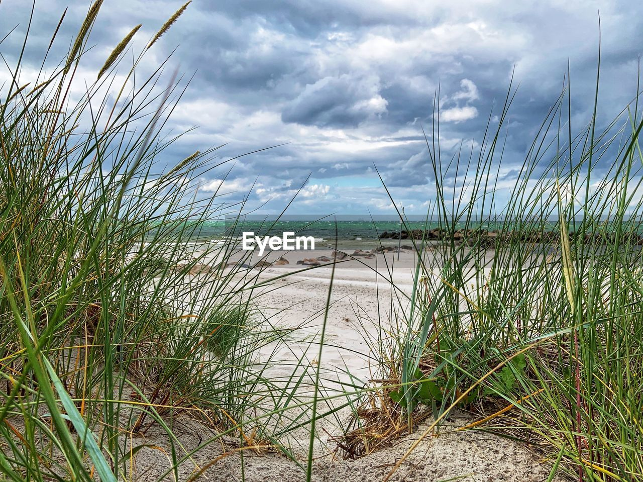 cloud - sky, sky, water, plant, grass, sea, beauty in nature, tranquility, beach, nature, growth, scenics - nature, land, day, tranquil scene, no people, horizon over water, green color, sand, marram grass, outdoors, timothy grass