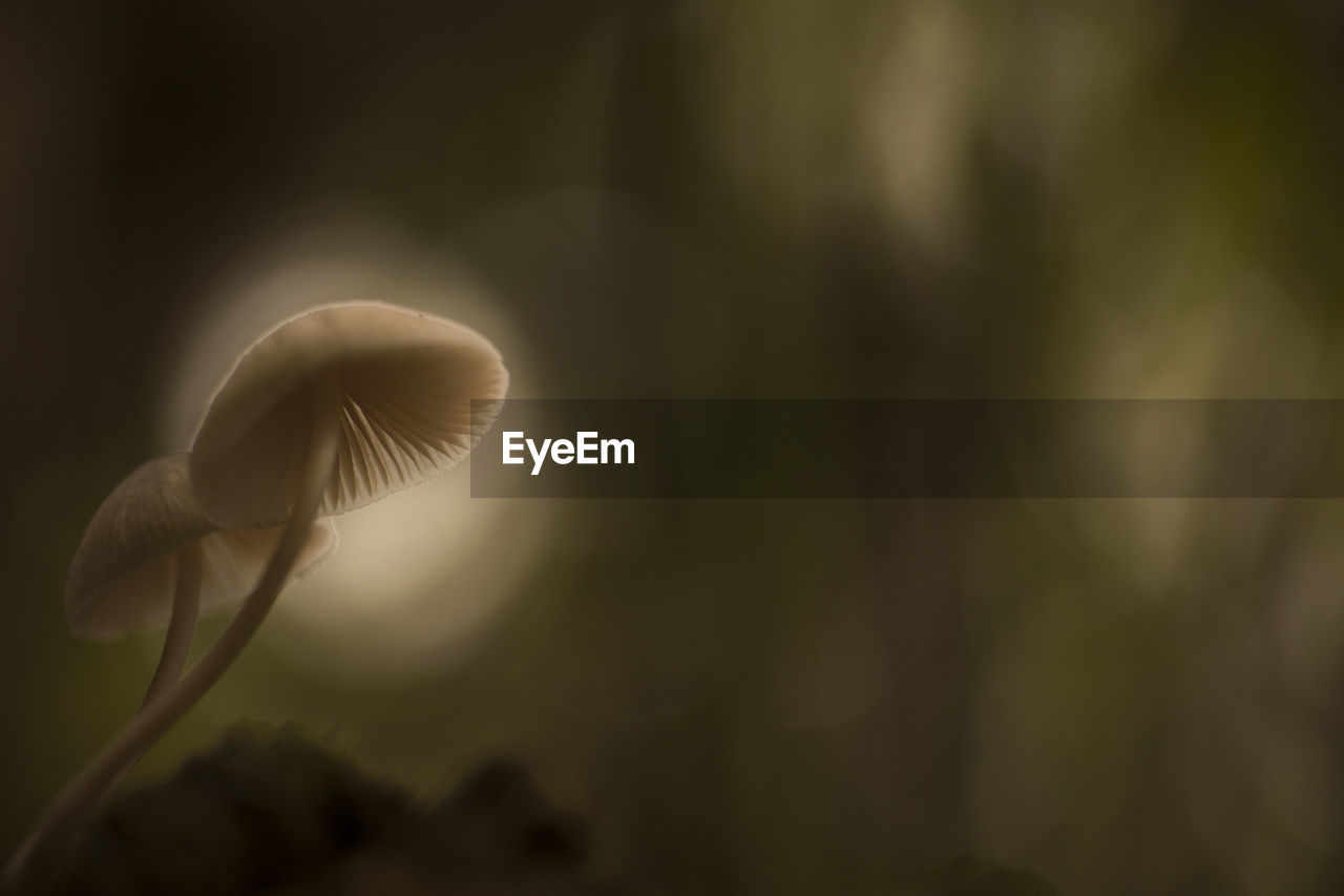 growth, vulnerability, fragility, close-up, beauty in nature, plant, freshness, no people, mushroom, nature, fungus, flower, focus on foreground, vegetable, selective focus, flowering plant, plant stem, white color, outdoors, food, toadstool