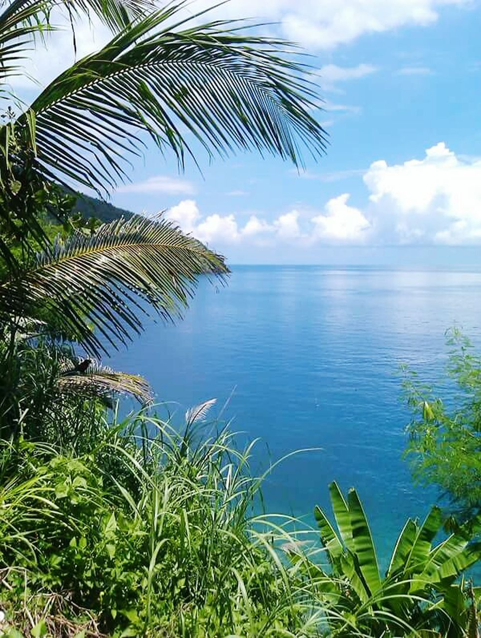 palm tree, tranquility, nature, beauty in nature, scenics, growth, tranquil scene, sea, water, sky, no people, outdoors, leaf, day, tree, horizon over water