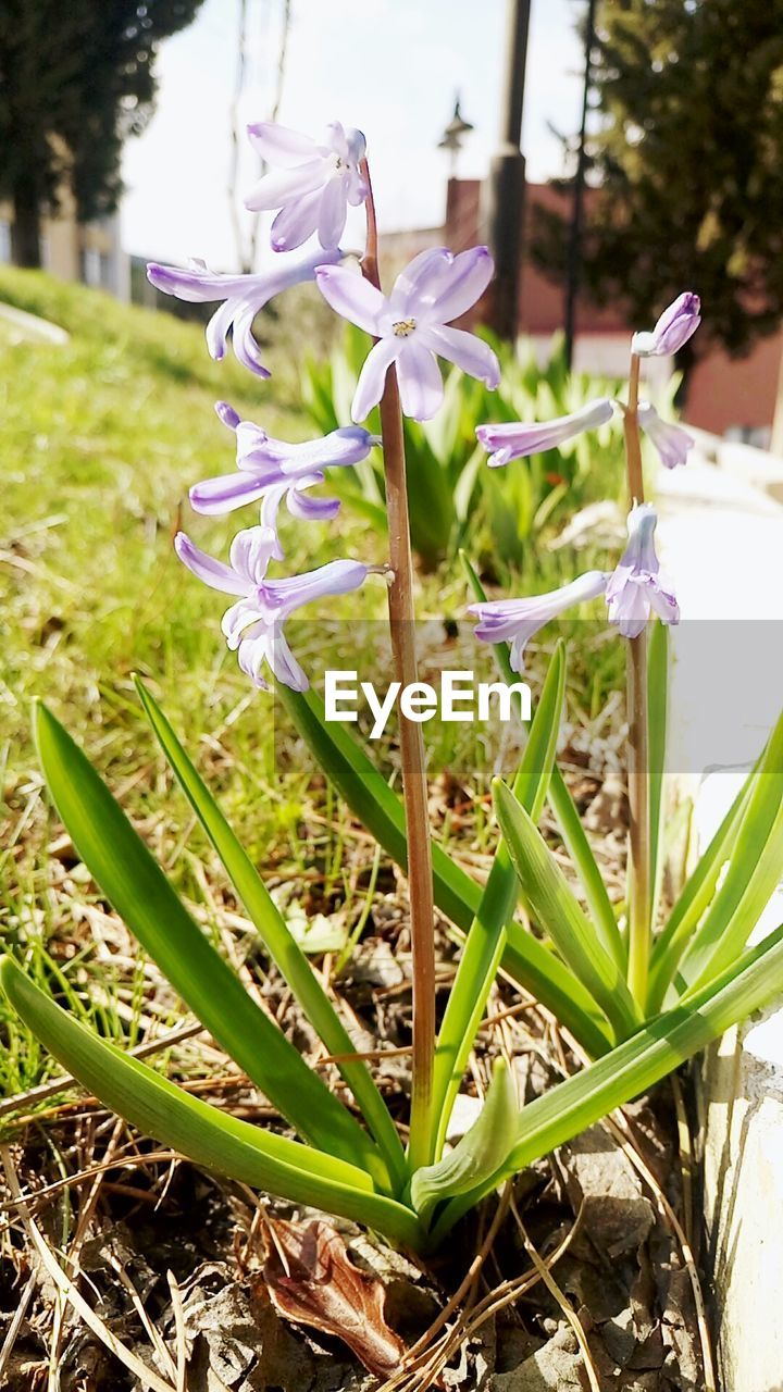 growth, flower, beauty in nature, nature, plant, fragility, petal, freshness, flower head, day, snowdrop, outdoors, no people, close-up, green color, field, blooming, grass, crocus