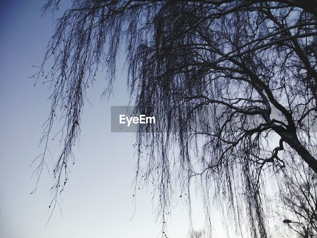 low angle view, nature, beauty in nature, no people, tranquility, outdoors, tree, clear sky, branch, sky, day, bare tree