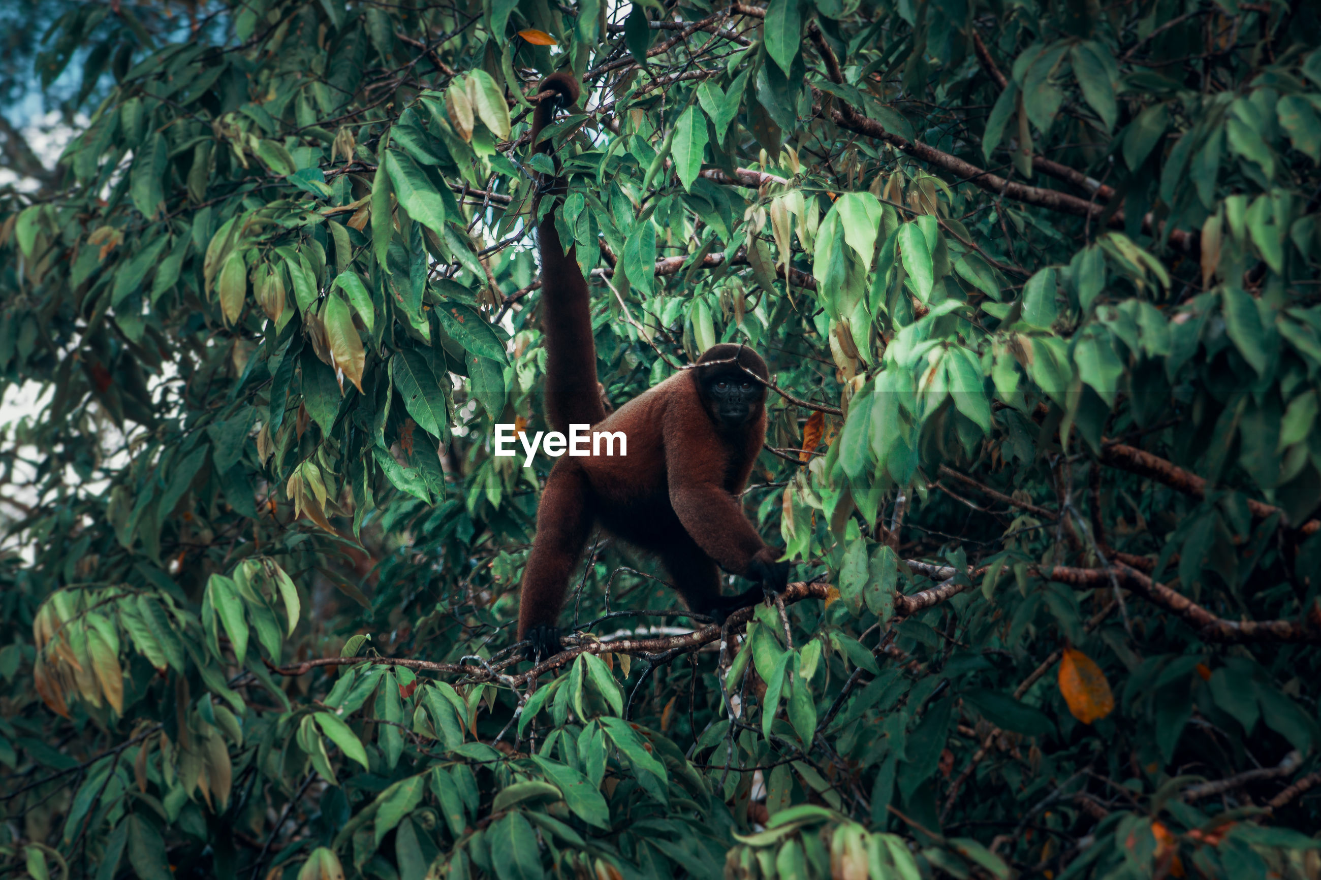 Monkey in a forest