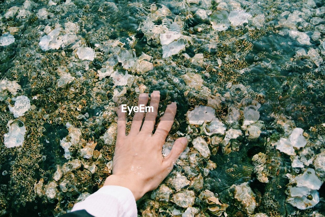 Close-Up Of Person Hand With Shells In Clear Water