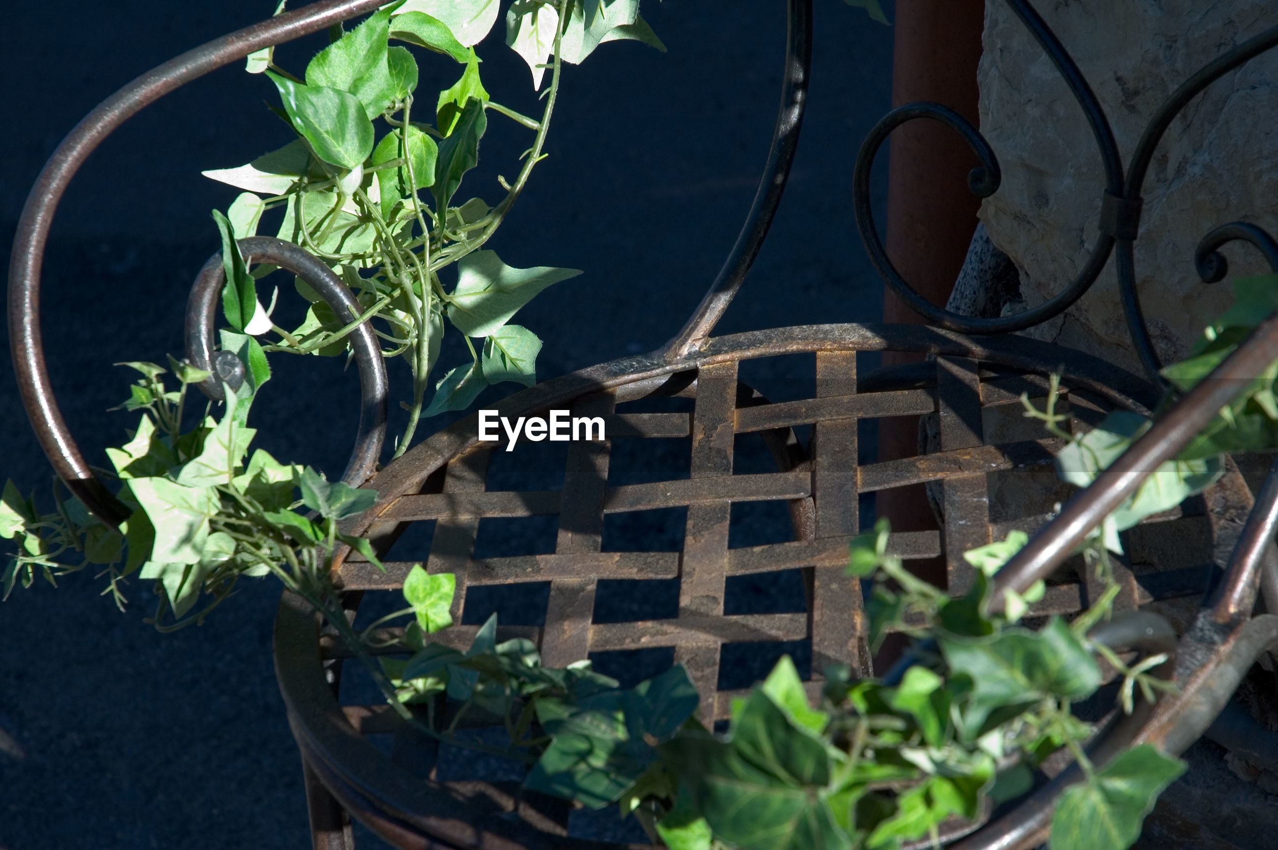 HIGH ANGLE VIEW OF POTTED PLANT ON METAL