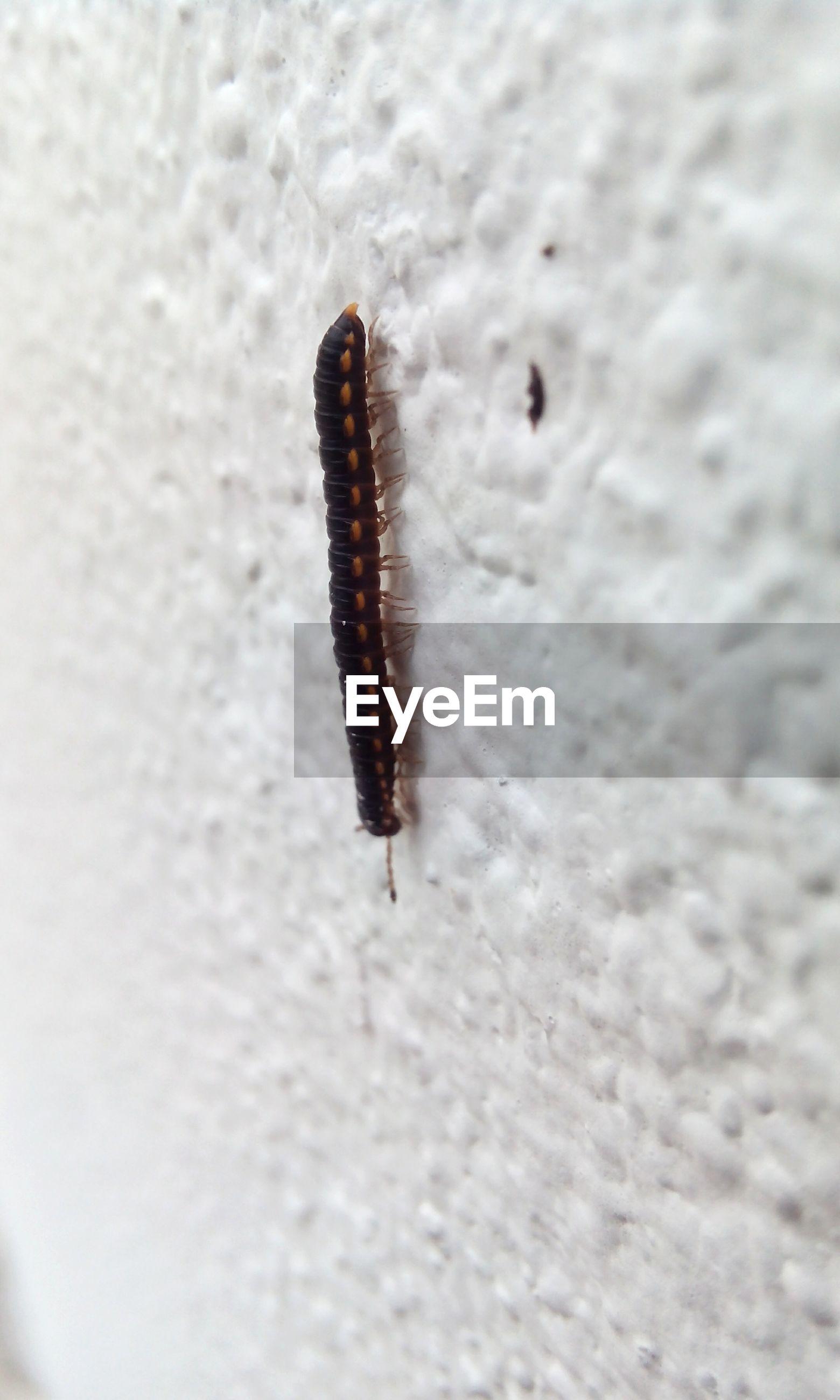 Close-up of caterpillar crawling on wall