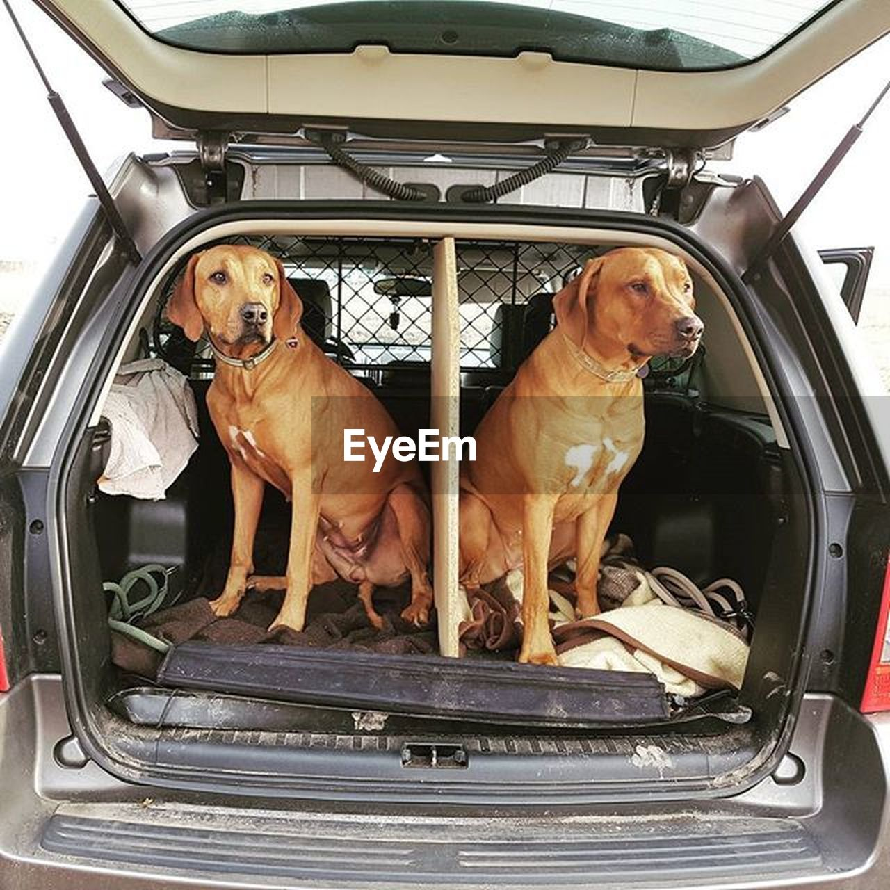 dog, pets, domestic animals, mammal, transportation, mode of transport, animal themes, day, car, no people, vehicle seat, indoors