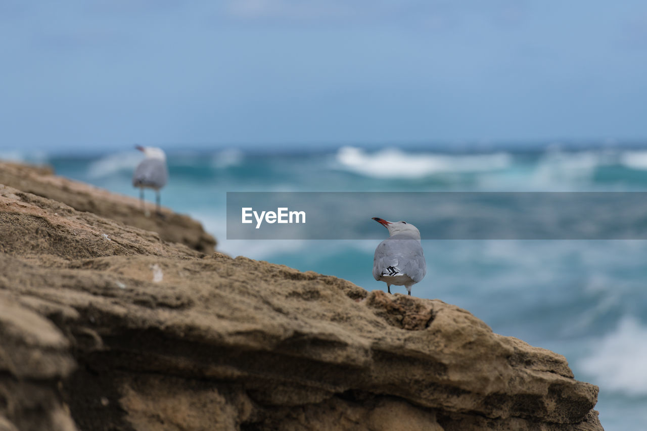 animal, animal themes, animal wildlife, bird, vertebrate, sea, rock, animals in the wild, one animal, rock - object, perching, solid, sky, day, water, nature, no people, selective focus, outdoors, horizon over water, seagull