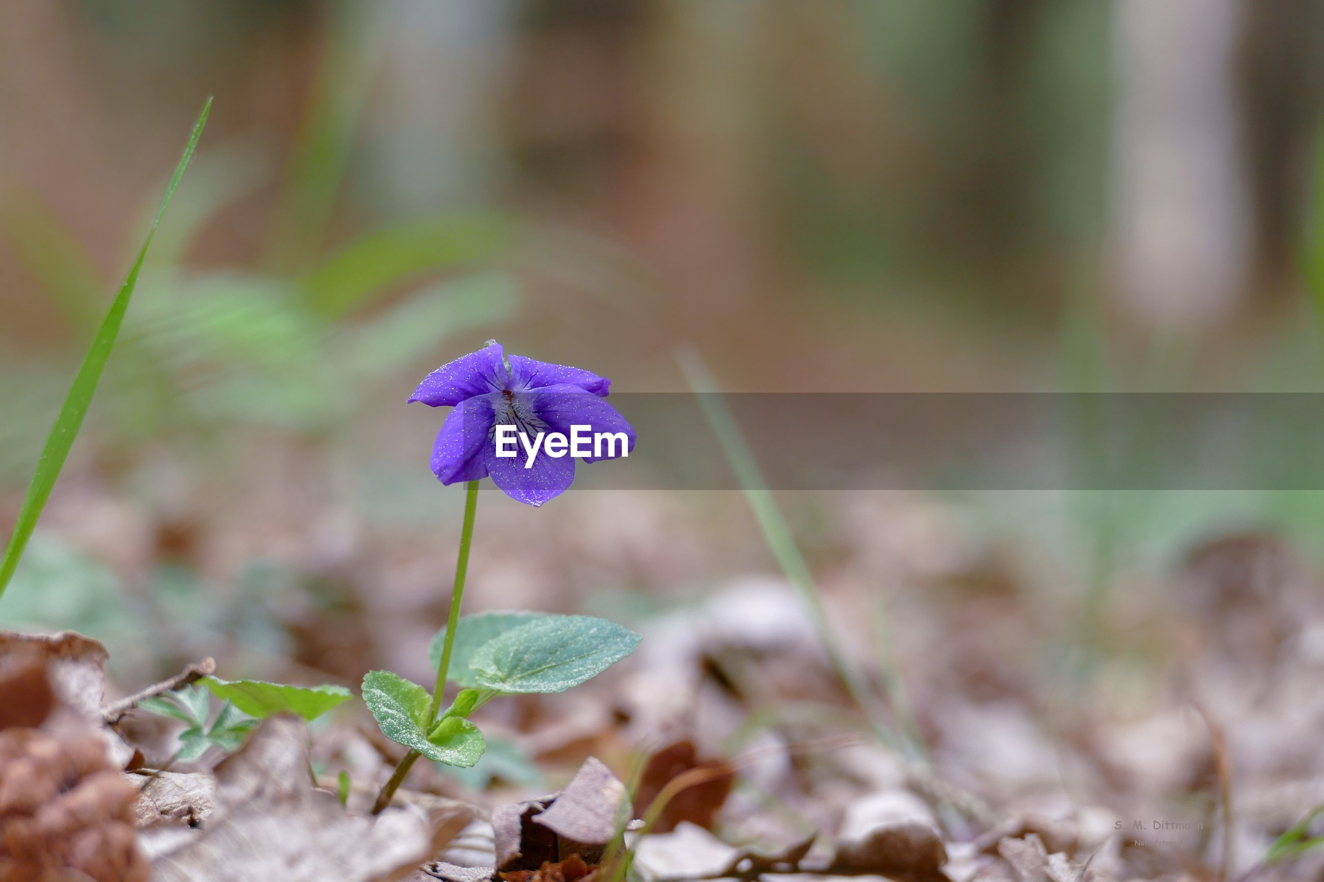 CLOSE-UP OF PURPLE FLOWERING PLANT ON LAND