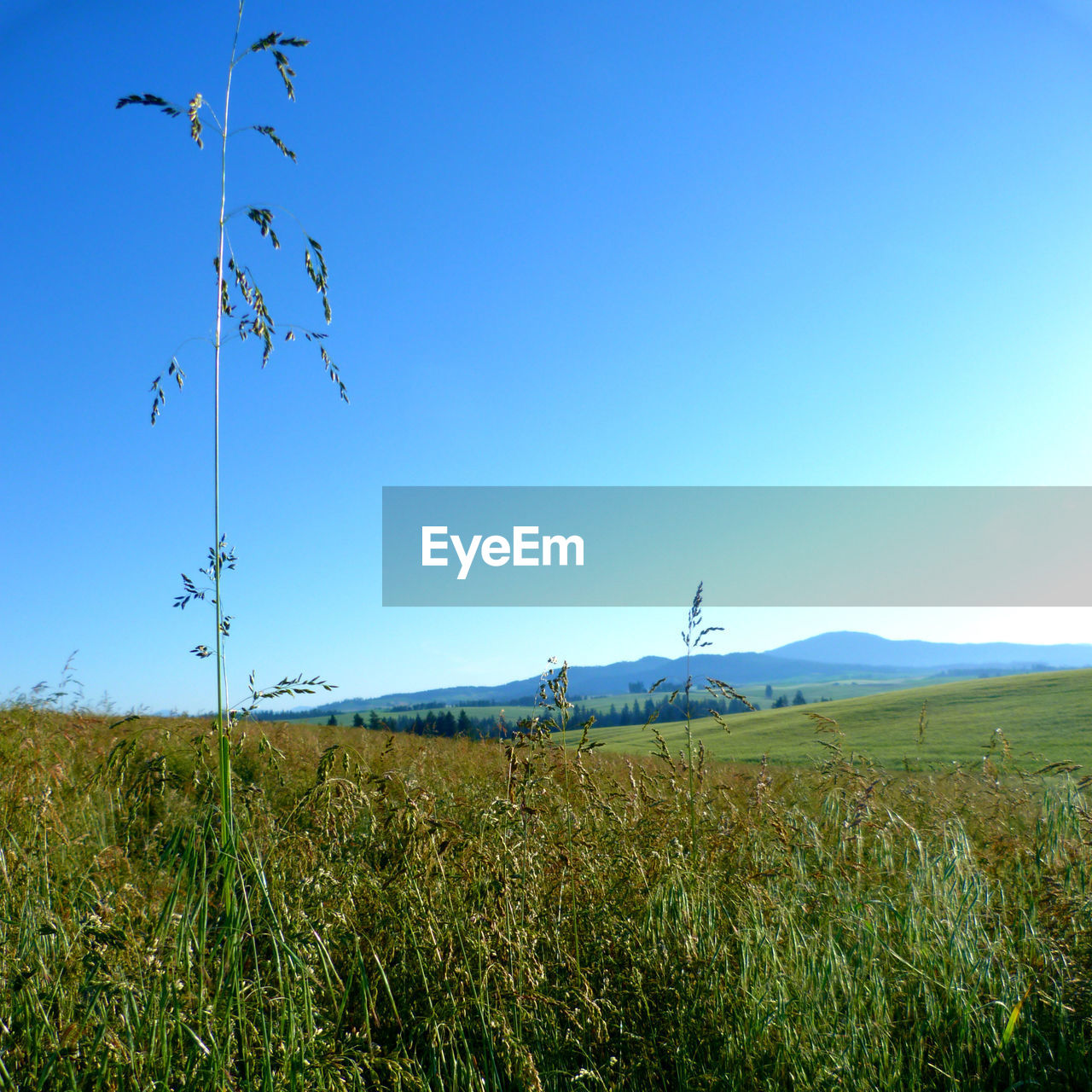 sky, plant, environment, landscape, field, land, grass, beauty in nature, scenics - nature, nature, blue, tranquility, copy space, growth, tranquil scene, clear sky, day, no people, green color, rural scene
