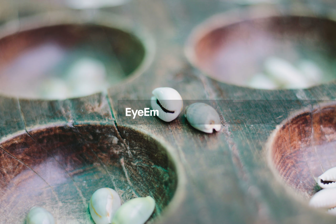 selective focus, close-up, no people, nature, day, plant part, leaf, animal, outdoors, plant, circle, shell, still life, metal, food and drink, geometric shape, animal themes, beauty in nature, water, personal accessory