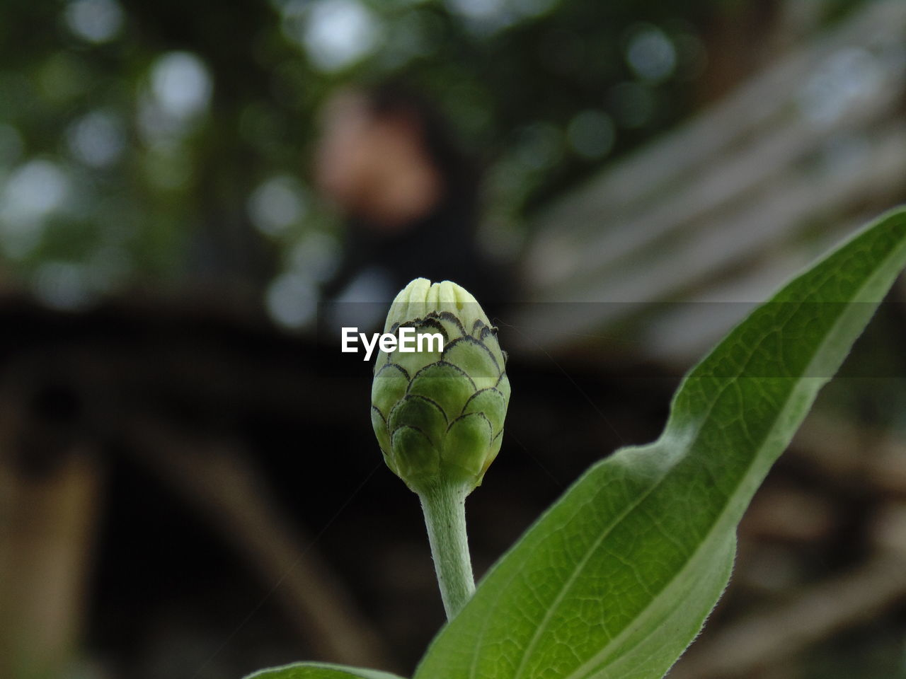 plant part, leaf, plant, growth, close-up, green color, focus on foreground, beauty in nature, day, nature, no people, freshness, outdoors, food, food and drink, bud, fragility, flower, selective focus, tree