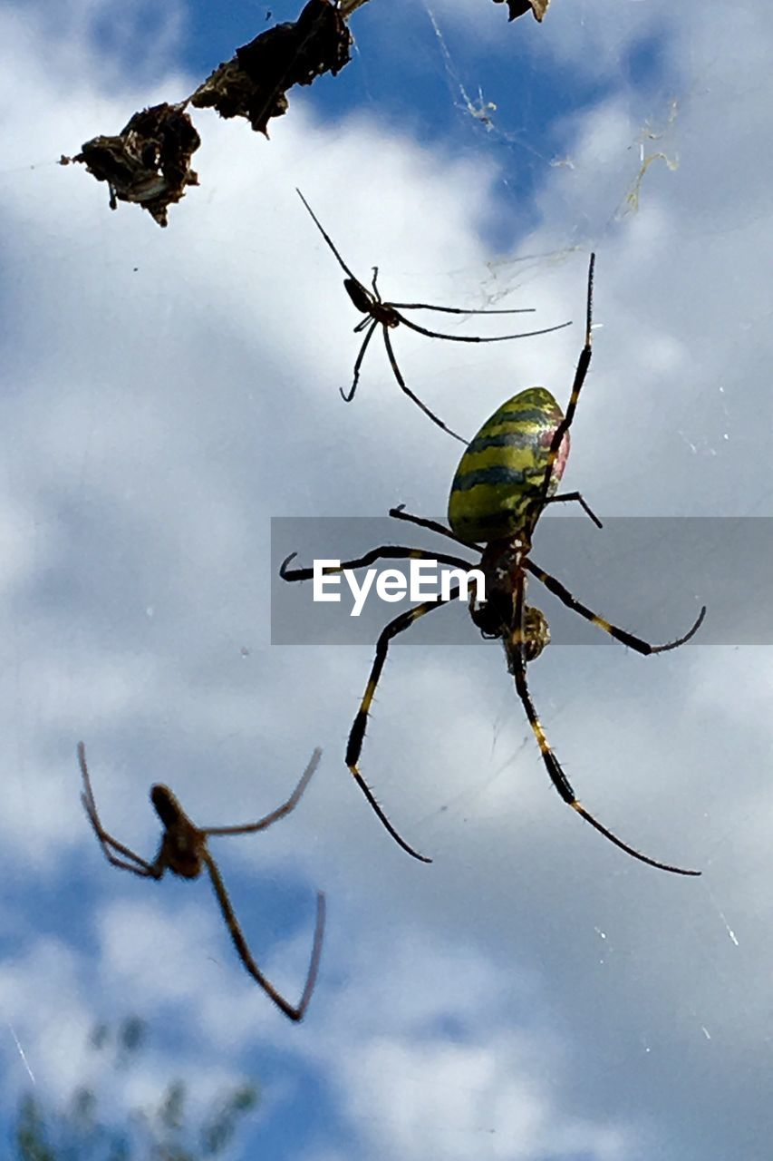 one animal, animal themes, insect, animals in the wild, spider, animal wildlife, no people, close-up, day, nature, outdoors, water, sky