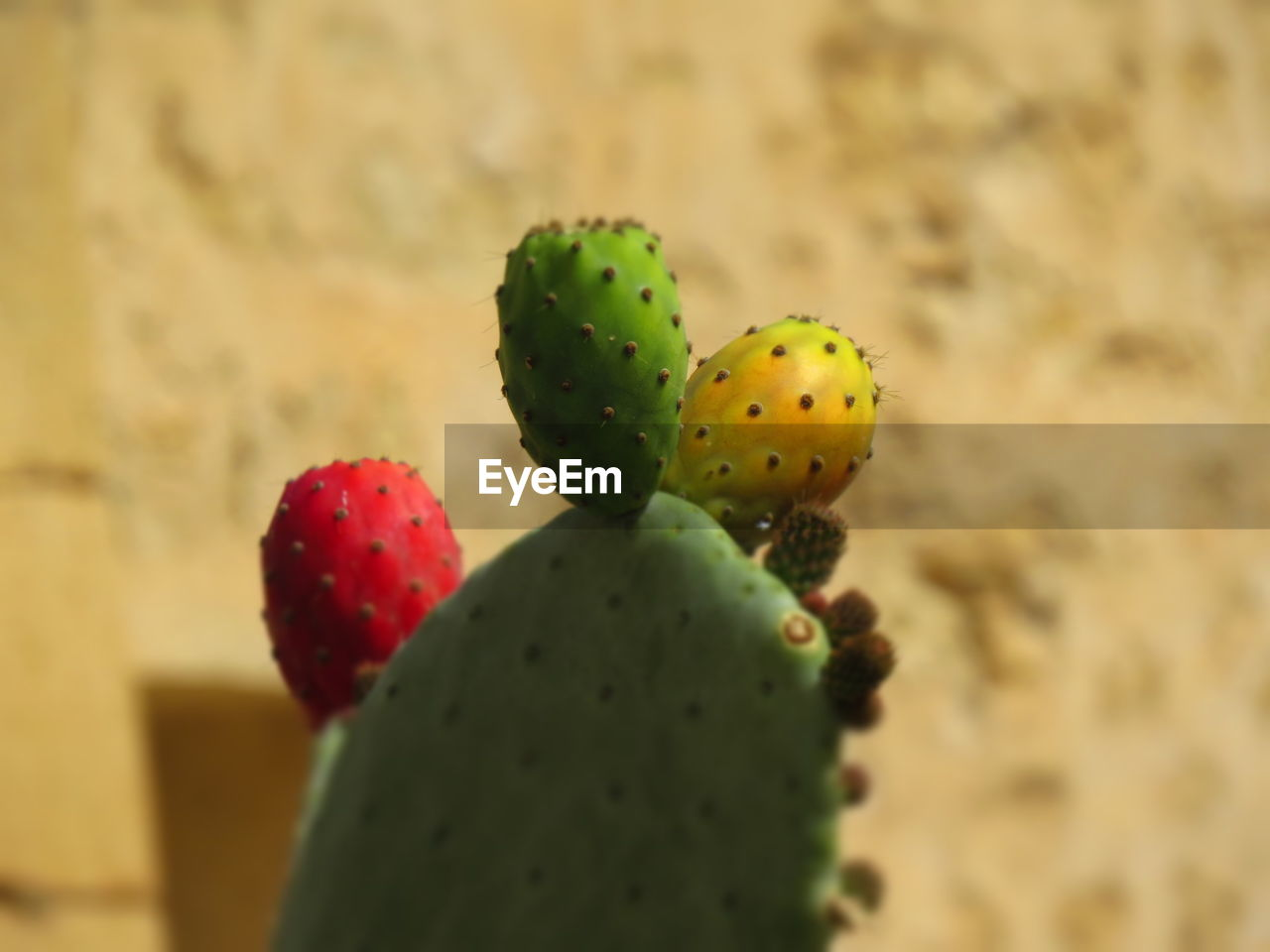 cactus, prickly pear cactus, thorn, focus on foreground, growth, close-up, spiked, nature, no people, green color, plant, risk, day, beauty in nature, freshness, outdoors