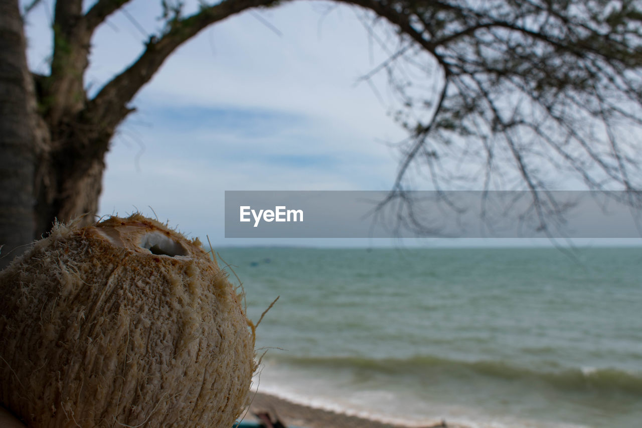 nature, one animal, sea, outdoors, no people, focus on foreground, day, beauty in nature, tranquility, animal themes, tree, water, sky, horizon over water, scenics, close-up, mammal
