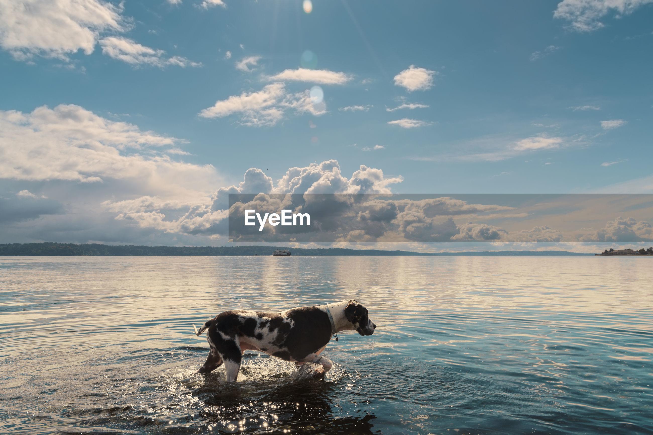 Dog walking in sea against sky