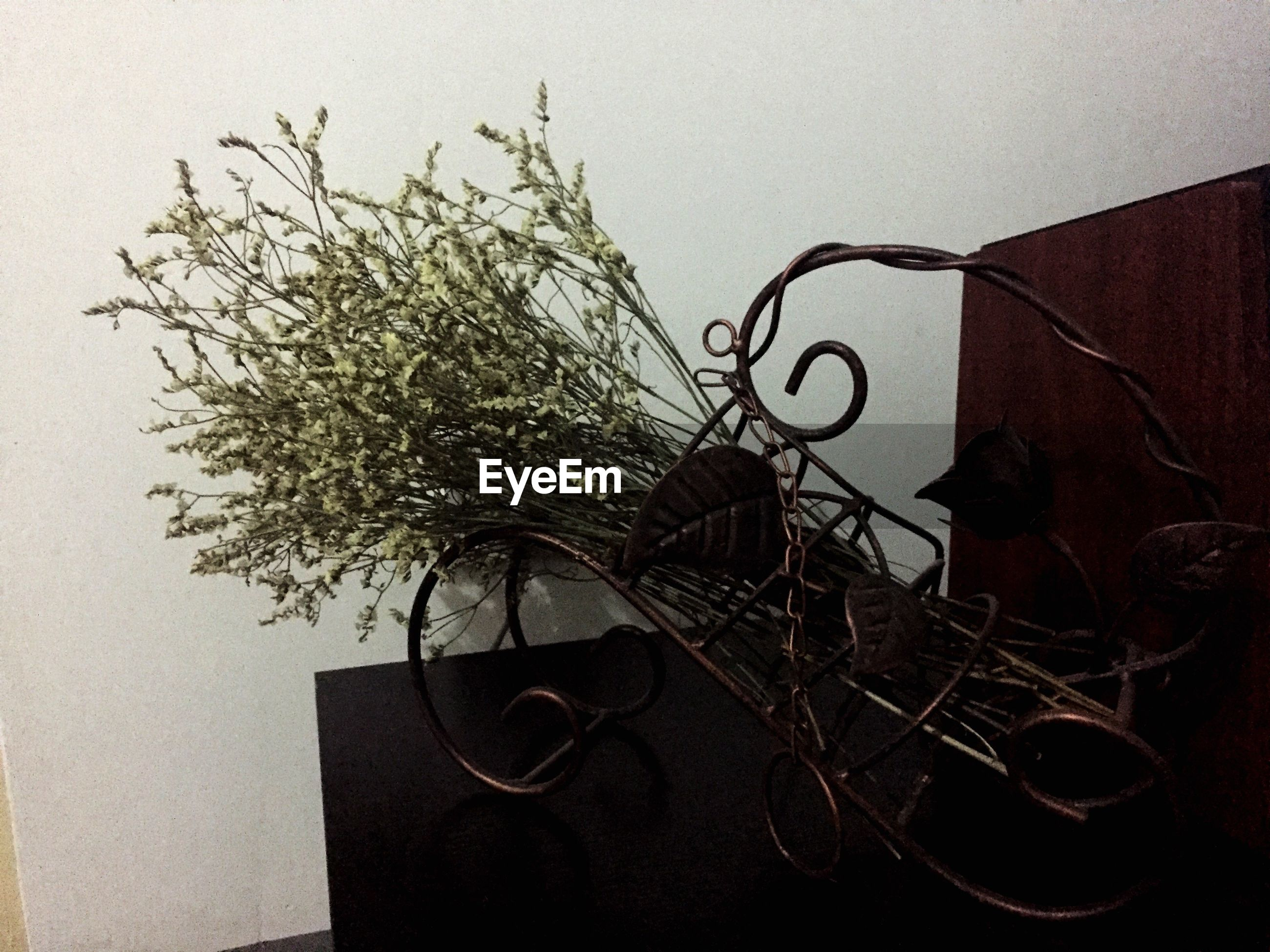 potted plant, plant, cable, wall - building feature, indoors, close-up, twig, growth, houseplant, dead plant, no people, dried plant, flower arrangement