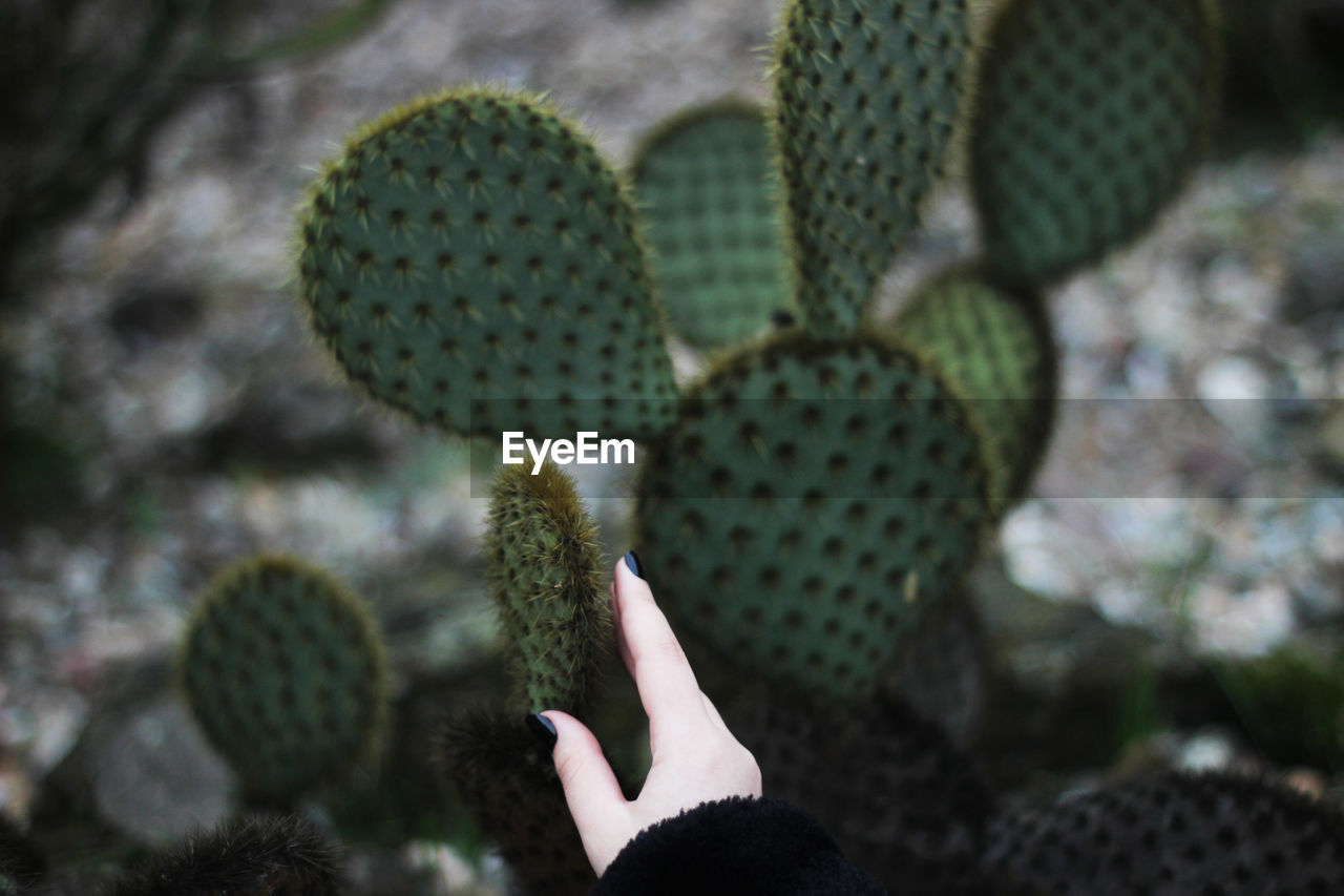 succulent plant, cactus, growth, plant, green color, thorn, spiked, close-up, nature, focus on foreground, day, beauty in nature, sharp, outdoors, sign, prickly pear cactus, natural pattern, hand, real people, warning sign, climate, arid climate