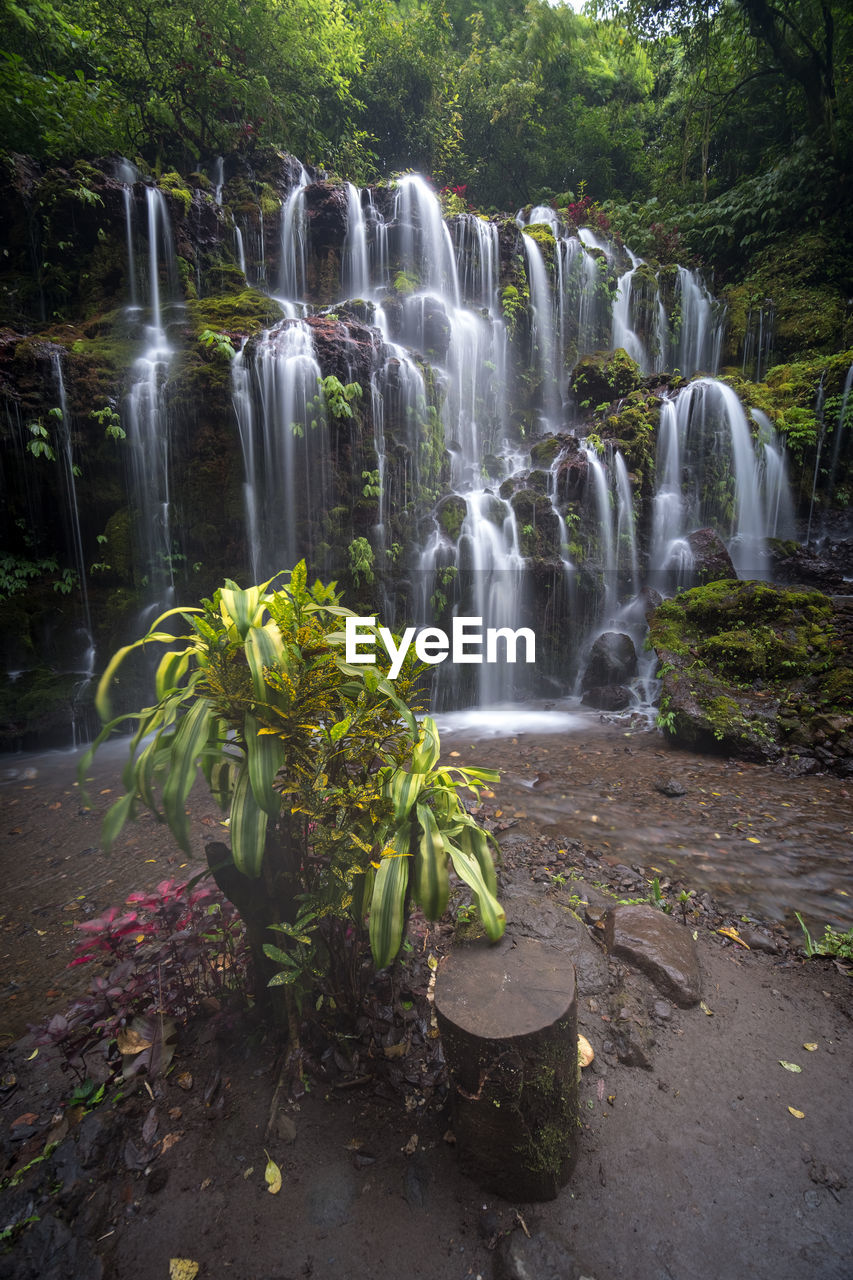 beauty in nature, scenics - nature, waterfall, long exposure, motion, water, plant, land, forest, nature, blurred motion, tree, environment, flowing water, no people, growth, rock, outdoors, day, flowing, rainforest, power in nature, falling water
