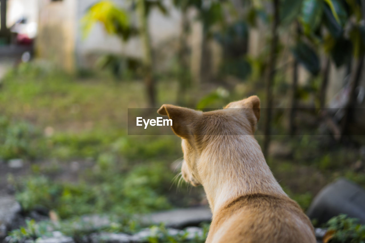 mammal, one animal, animal themes, pets, animal, domestic animals, domestic, vertebrate, canine, focus on foreground, dog, cat, domestic cat, feline, no people, day, rear view, close-up, looking, outdoors, animal head, profile view, whisker