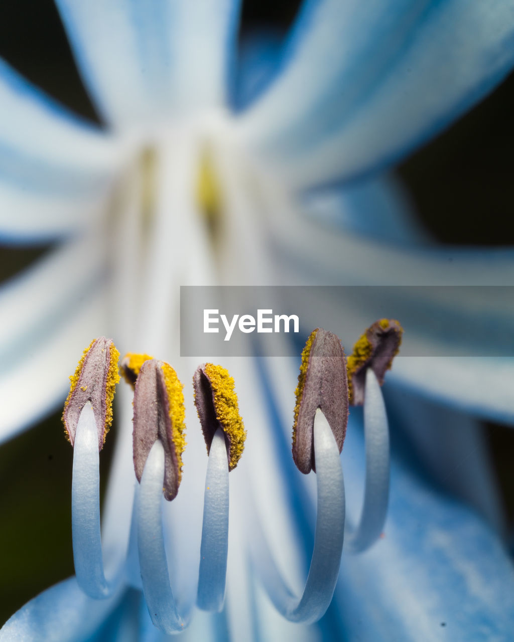 Extreme close-up of blue flower
