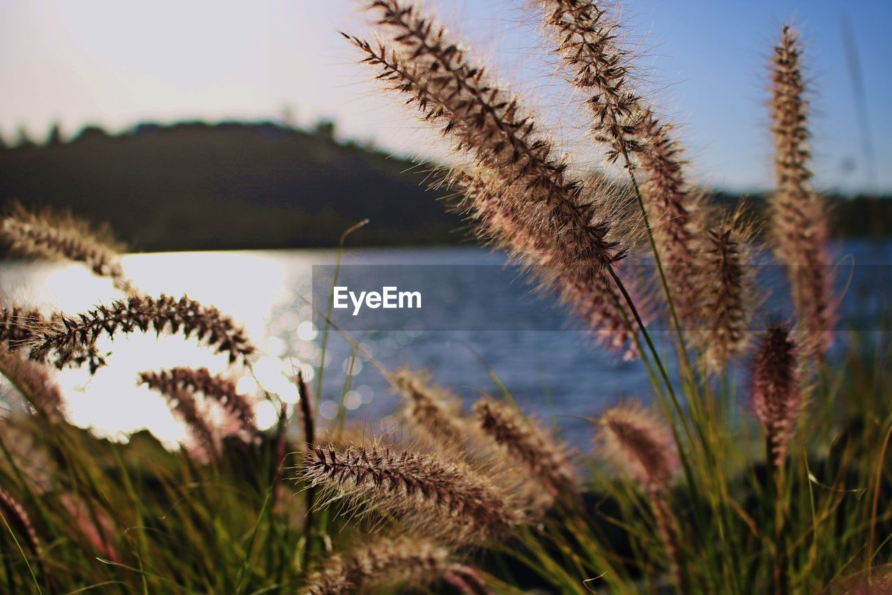 growth, nature, plant, tranquility, cactus, no people, beauty in nature, spiked, focus on foreground, outdoors, day, scenics, sky, close-up, grass