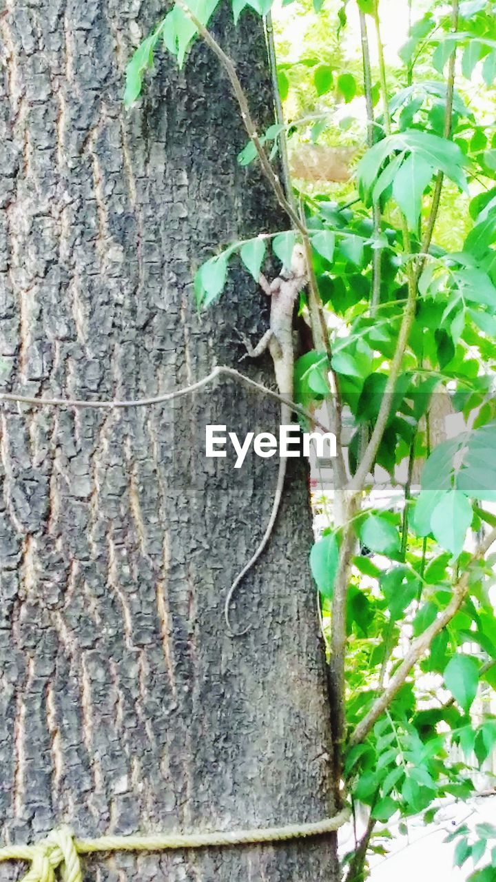 plant, tree trunk, trunk, growth, tree, close-up, nature, plant part, no people, leaf, day, green color, outdoors, textured, bark, branch, beauty in nature, wood - material, focus on foreground, plant bark