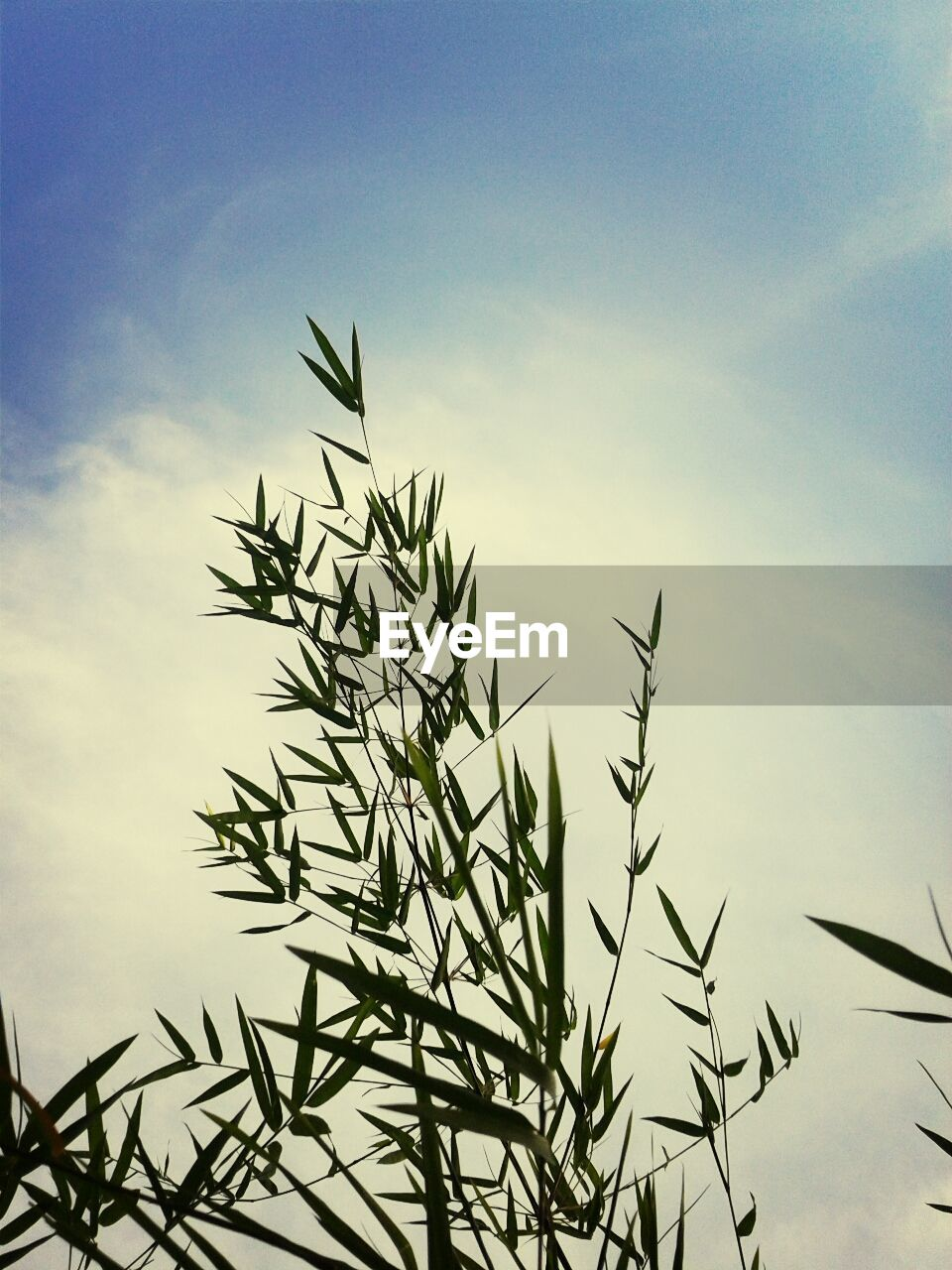 growth, nature, sky, plant, outdoors, no people, low angle view, beauty in nature, tranquility, day, close-up