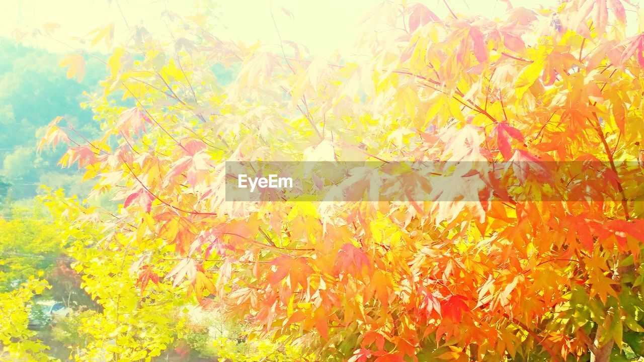 yellow, orange color, autumn, multi colored, vibrant color, leaf, nature, backgrounds, outdoors, full frame, beauty in nature, day, no people, close-up, flower, freshness, tree