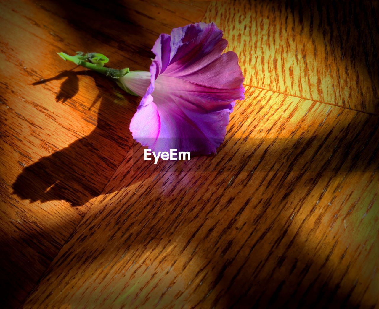 Close-up of fresh purple flower on table