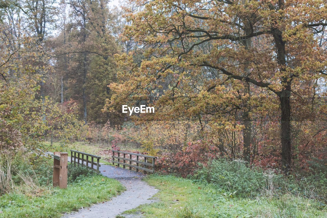 autumn, tree, nature, change, forest, outdoors, beauty in nature, leaf, scenics, growth, no people, day, branch, grass