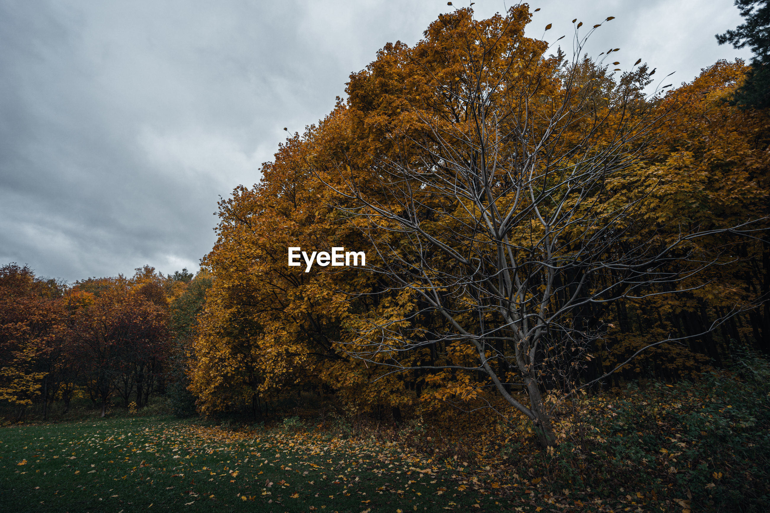 View of autumnal trees against sky