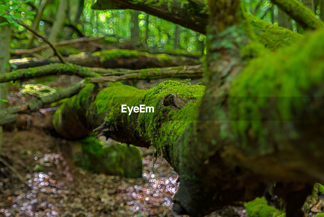 tree, moss, plant, green color, forest, nature, no people, water, growth, day, selective focus, animals in the wild, animal wildlife, tranquility, beauty in nature, land, animal, animal themes, tree trunk, outdoors, rainforest